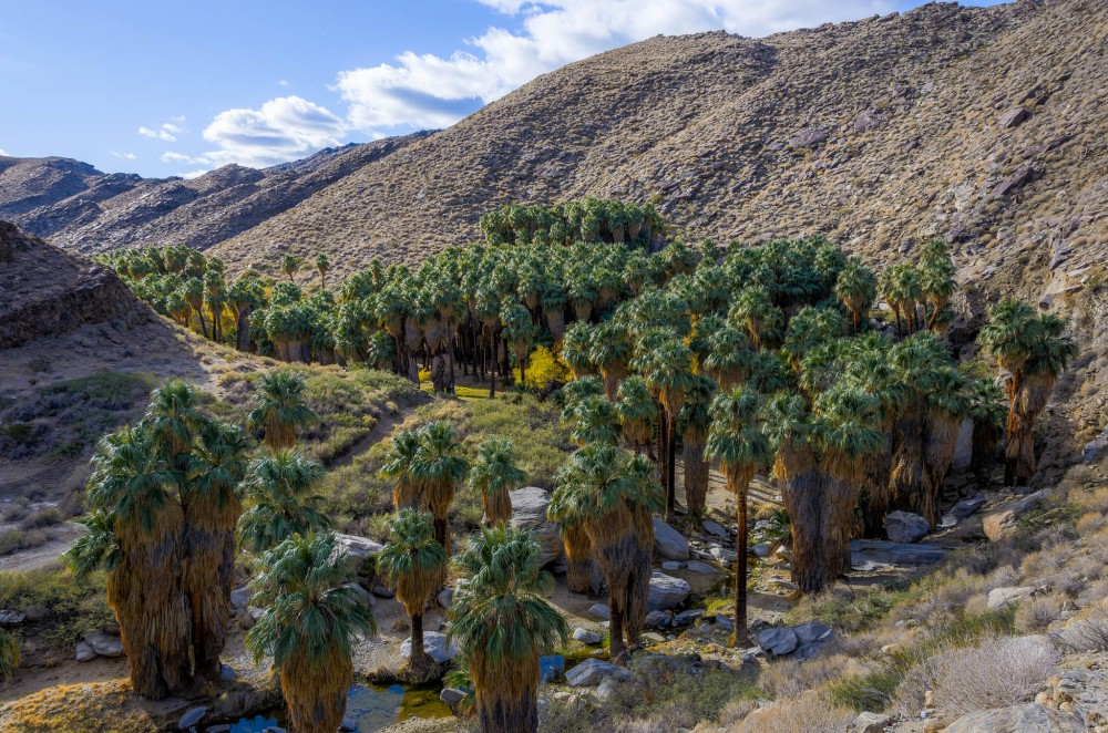 agua caliente indian canyons em palm springs